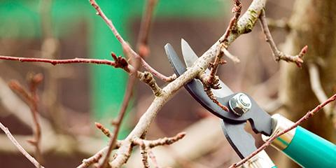 Why It's Crucial to Prune Trees, Owings Mills, Maryland
