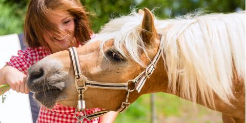 3 Beginner Tips for Feeding Your Horse, Melrose, Wisconsin