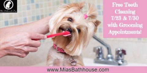 **FREE* Teeth Cleaning For Dogs - July 23rd & 30th, Manhattan, New York