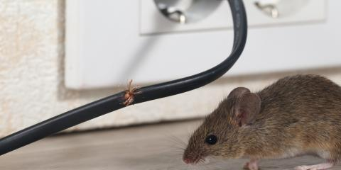 How to Keep Mice Out of Your Home During Winter, China Grove, North Carolina