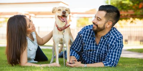 3 Benefits of Pet Microchip Identification, Amsterdam, Virginia
