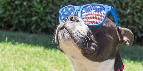 Mobile Vet Highlights Importance of Pet Microchipping for 4th of July , Denver, Colorado