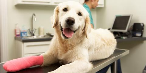 Post-Animal Surgery: How to Care for Your Pet, Kinsman, Ohio