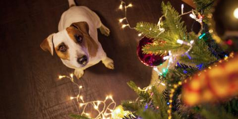 A Veterinarian's 5 Tips for Holiday Pet Safety, Middlefield, Ohio