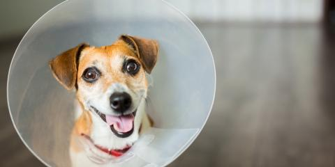 What You Need To Know About Your Pet's 'Cone of Shame', Jamestown, Pennsylvania