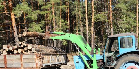 Selling Standing Timber Trusted Ohio Lumber Buyers Share