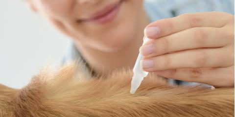 Local Veterinarian Shares 3 Types of Flea & Tick Prevention , Middlefield, Ohio