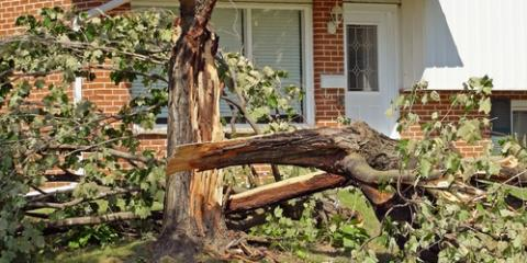 How to Successfully Care for Trees During Storm Damage Cleanup, Midland City, Alabama
