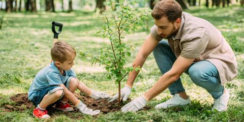 3 Benefits of Planting New Trees in Your Yard, Midland City, Alabama
