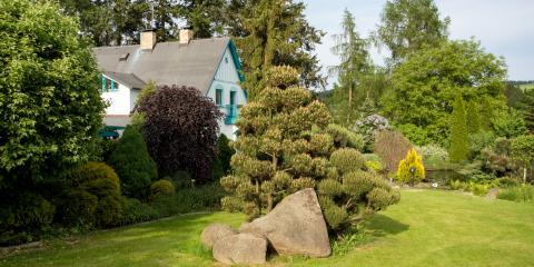 4 Common Tree Diseases in Alabama, Midland City, Alabama