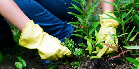 3 Tips to Eliminate Weeds on Your Lawn, Whiteville, Arkansas