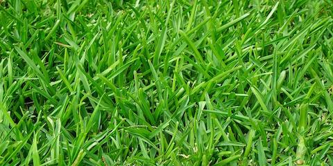 Aerate Your Yard for Optimal Lawn Care, Hinesville, Georgia