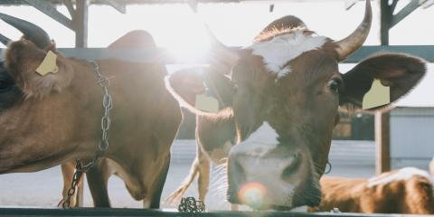 3 Ways to Protect Your Cattle in the Heat, Whiteville, Arkansas