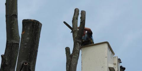 Mike's Tree Service, Tree Service, Services, Cleves, Ohio