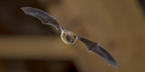 A Homeowner's Guide to Bat Exclusion, Miami, Ohio
