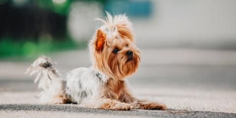 How to Choose the Right Dog Breed, Milford, Connecticut