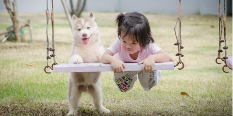 3 Ways to Foster Safe Interaction Between Your Children & Dog, Milford, Connecticut