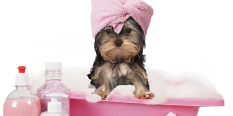What to Expect From a Dog Grooming Appointment, Miami, Ohio
