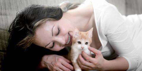 A Guide to Home Pet Sitting vs. Boarding, Miami, Ohio