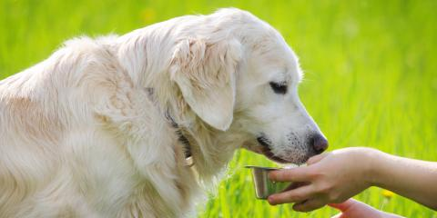 5 Useful Tips for Ending Your Dog's Food Aggression, Milford, Connecticut