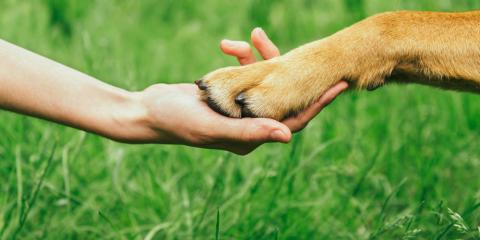 4 Common Types of Services Offered by Pet Clinics, Milford, Ohio