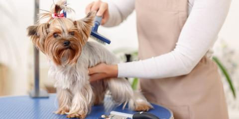 3 Aspects Puppy Owners Should Know About Grooming, Miami, Ohio