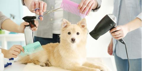 Does Dog Grooming Differ Between Different Types of Fur?, Miami, Ohio