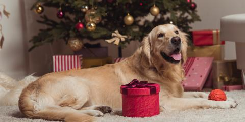 Let a Groomer Pamper Your Pet This Holiday Season!, Miami, Ohio
