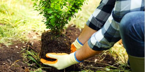 Local Tree Care Experts Explain Why You Shouldn't Plant New Trees in Summer, Milford, Ohio