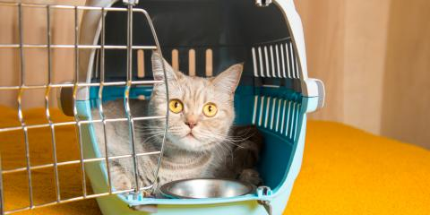 Top 5 Tips to Prepare Pets for Boarding, Mililani Mauka, Hawaii