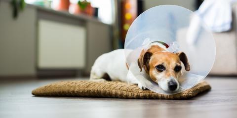 Do's & Don'ts of Caring for Pets After Spaying & Neutering, Mililani Mauka, Hawaii