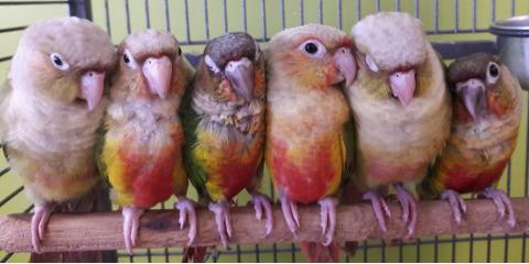 See The Pet Hale's Assortment of Exotic Birds!, Ewa, Hawaii