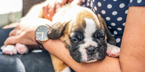3 Tips to Get Your Puppy Ready for Their First Vet Visit, Mililani Mauka, Hawaii