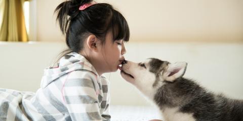 5 Tricks for Getting Dogs to Take Medicine, Mililani Mauka, Hawaii