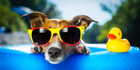 Pet Care Tips for Hot Summer Days, Ewa, Hawaii