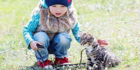 Mililani Pet Shop Shares 5 Tips for Training Your Cat, Ewa, Hawaii