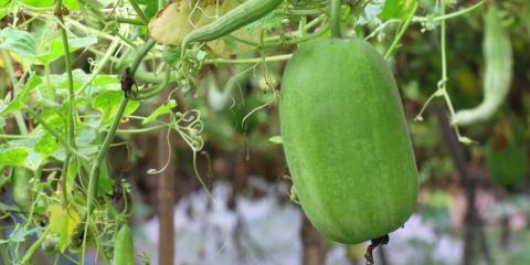 What Is Winter Melon Milk Tea?, Ewa, Hawaii