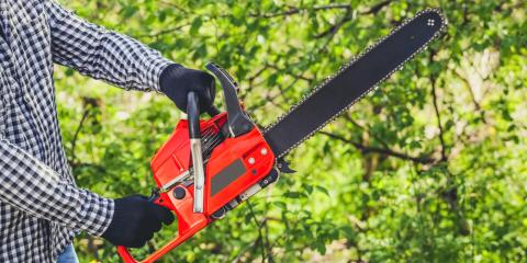 Tree Service Shares 5 Signs You Need Tree Removal, Sparta, Georgia
