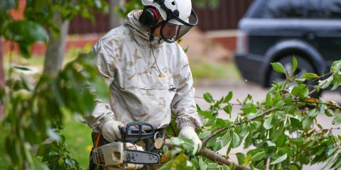 4 Tree Diseases Common in Illinois, Millstadt, Illinois