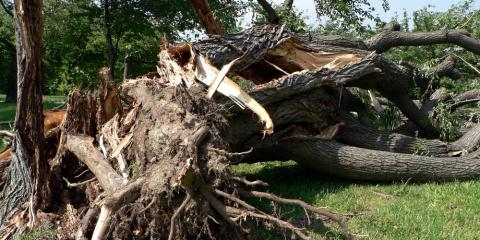 How to Care for Storm-Damaged Trees, Milton, Pennsylvania
