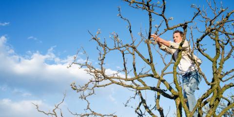 Arborists Explain the Benefits of Pruning Your Trees, Milton, Pennsylvania
