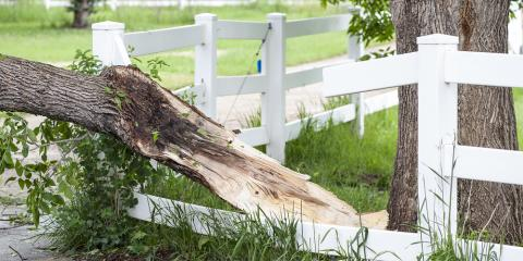 Why Professional Tree Removal Is so Important, Milton, Pennsylvania