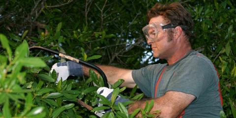 3 Questions You Should Ask Before Hiring a Tree Trimming Company, Milton, Pennsylvania