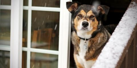 How to Help Your Dog Adapt to the Cold Minnesota Weather, Golden Valley, Minnesota