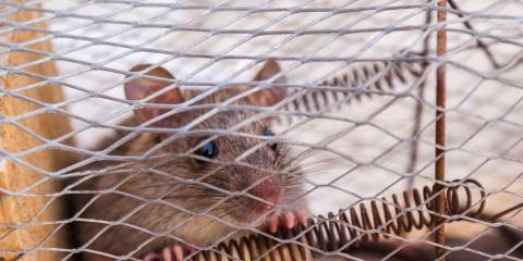 3 Humane & Poison-Free Mouse Control Solutions, Eden Prairie, Minnesota