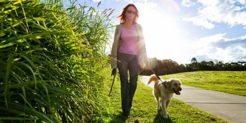 3 Tips to Stop Your Dog From Pulling on Their Leash, Piney, Missouri