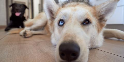 Rochester Pet Odor Removal Experts Explain How to Keep Your Puppy Smelling Fresh, Rochester, Minnesota