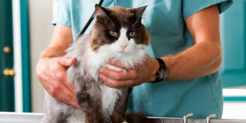 Animal Hospital Celebrates National Take Your Cat to the Vet Day, Columbia, Missouri