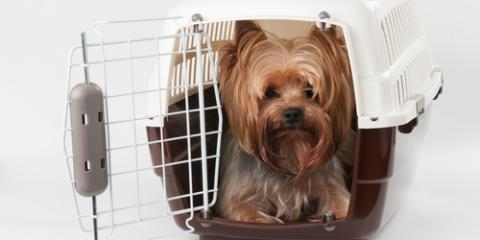 The Do's & Don'ts of Crate Training Your Puppy, Defiance, Missouri