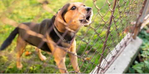 How Fences Can Keep Big Dogs on Your Property, Columbia, Missouri